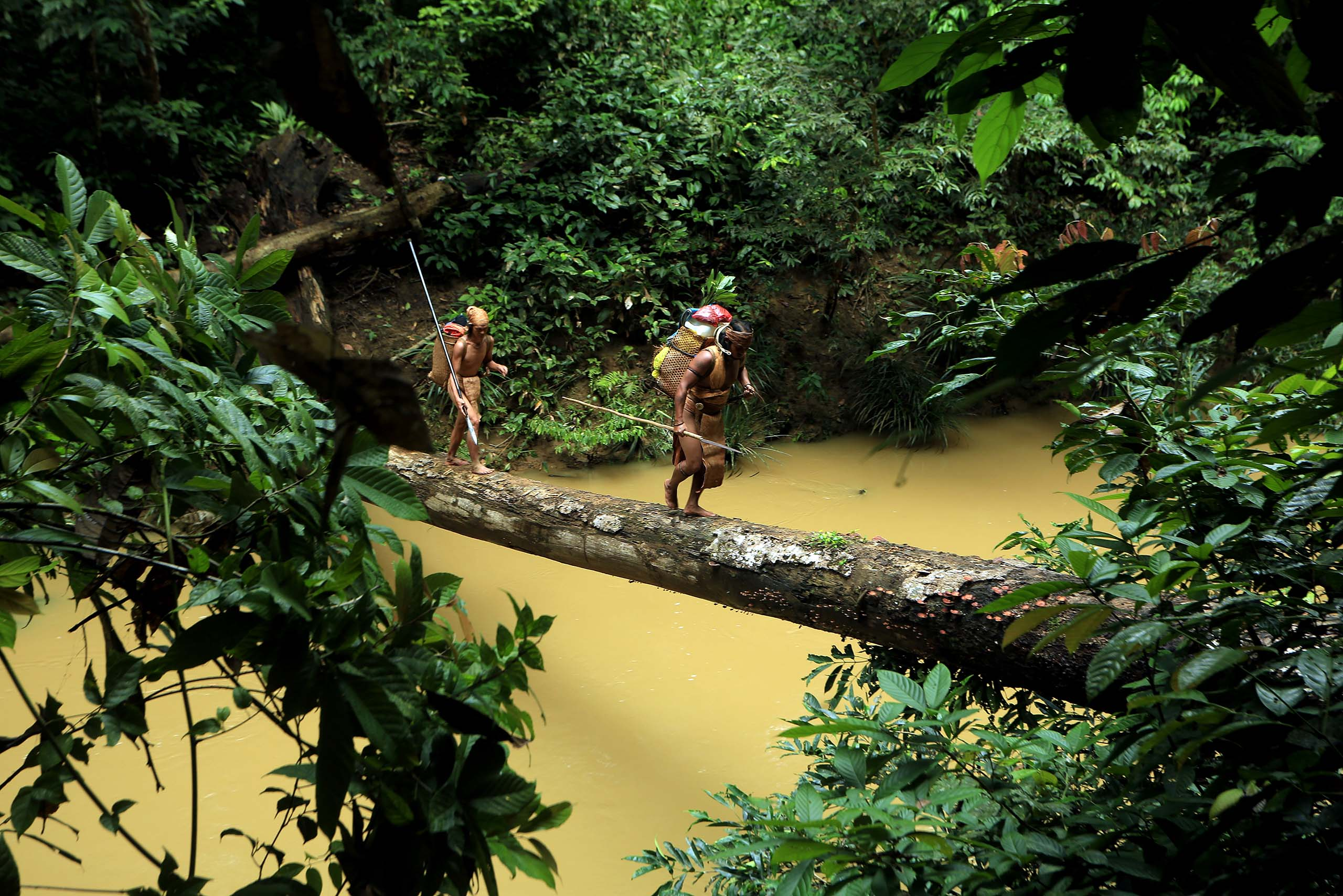 Mandara dayak jungle éco-tourisme indonésie