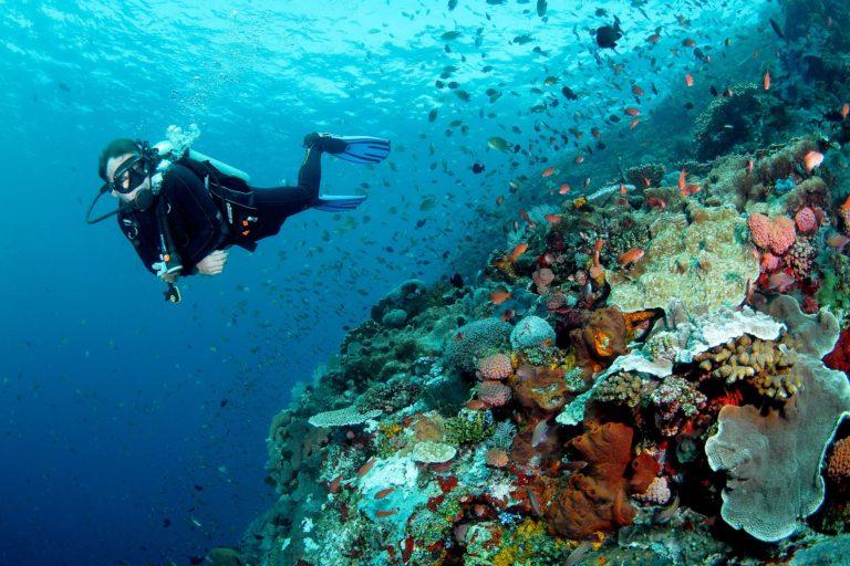Mandara raja ampat éco-tourisme