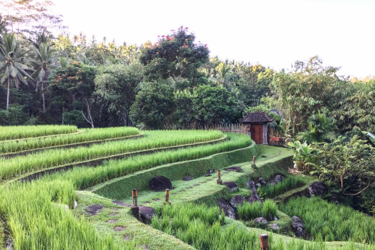 Mandara rizière bali éco-tourisme